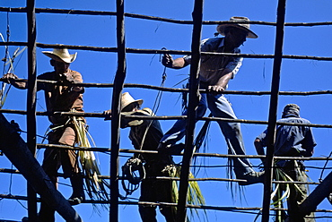 Campesinos thatching the roof of a farmhouse in rural Pinar del Rio Province in western Cuba, Cuba