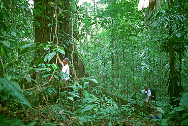 Afro-Ecuadorians in the lowland rainforest near Esmeraldas on the western slopes of the Andes in the Choco Bio-region, North of Quito, Highlands, Ecuador