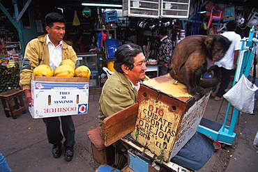 Chiclayo Mercado de Brujos or Witchcraft Market with many choices of herbal medicines, potions and charms a trained fortune telling monkey, North Coast, Peru