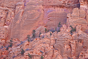 Salmon-coloured sandstone wall with evergreens, Grand Staircase-Escalante National Monument, Utah, United States of America, North America