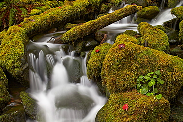Cascades through moss-covered boulders, Olympic National Park, UNESCO World Heritage Site, Washington, United States of America, North America