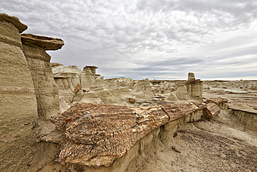 Petrified tree trunk in the badlands, Bisti Wilderness, New Mexico, United States of America, North America
