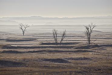 Three bare trees on a hazy morning, Badlands National Park, South Dakota, United States of America, North America