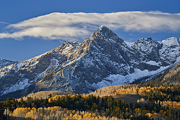 Wolcott Mountain in the fall with yellow and bare aspen, Uncompahgre National Forest, Colorado, United States of America, North America