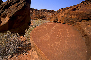 Twyfelfontein rock engravings (petroglyphs) dating from the late Stone Age, between 6000 and 2000 years, UNESCO World Heritage Site, Kunene region, Namibia, Africa