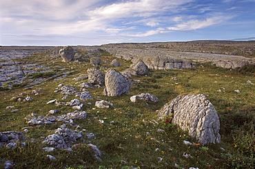 Limestone plateau, karstic landscape, Burren region, County Clare, Munster, Republic of Ireland, Europe