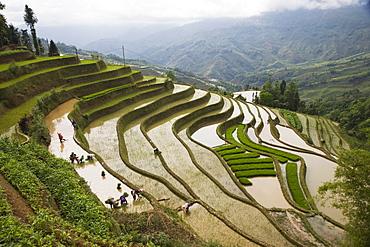 Terraced rice fields, Yuanyang, Yunnan Province, China, Asia
