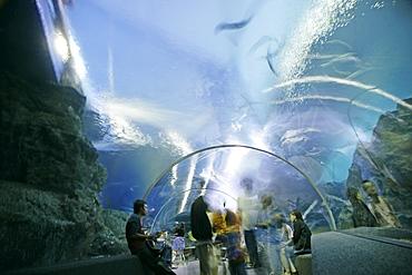 Ocean World, Siam Paragon shopping mall, Bangkok, Thailand, Southeast Asia, Asia