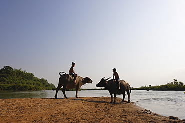 Two boys on water buffalo beside the Mekong river, near Kratie, eastern Cambodia, Indochina, Southeast Asia, Asia