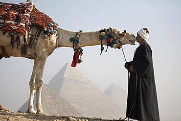 A Bedouin guide with his camel, overlooking the Pyramids of Giza, UNESCO World Heritage Site, Cairo, Egypt, North Africa, Africa