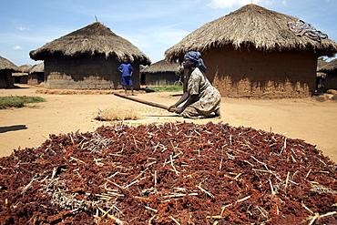 A woman pounds grain, Gulu, Uganda, East Africa, Africa
