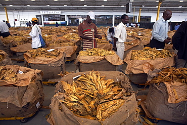 The famous tobacco auction floor in Harare, Zimbabwe, Africa