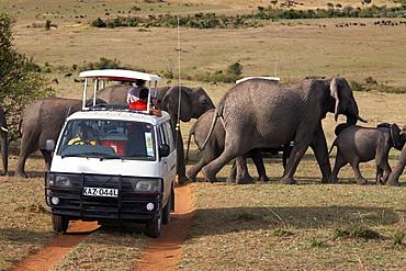 Tourists on safari watch a herd of elephants in the Masai Mara National Reserve, Kenya, East Africa, Africa