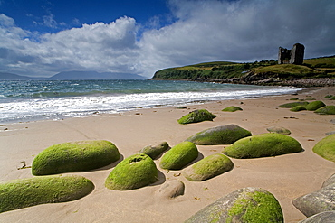 Minnard Beach, Dingle, County Kerry, Munster, Republic of Ireland, Europe - 776-1099