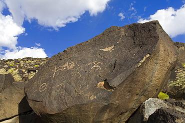Petroglyph National Monument (Boca Negra Canyon), Albuquerque, New Mexico, United States of America, North America