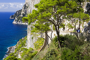 Cliffs near Capri town, Capri Island, Bay of Naples, Campania, Italy, Europe