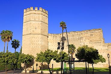 Alcazar Castle, Jerez de la Frontera, Andalusia, Spain, Europe