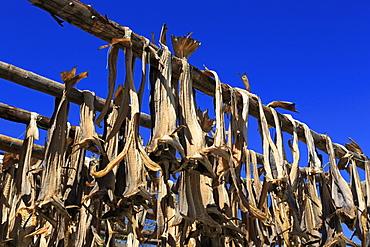 Drying cod, Ballstad Fishing Village, Lofoten Islands, Nordland County, Arctic, Norway, Scandinavia, Europe