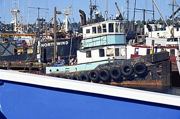 Tug boat, Fisherman's Terminal, Salmon Bay, Seattle, Washington state, United States of America, North America