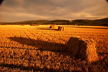 Hay bales, Newcastle, County Tipperary, Munster, Republic of Ireland, Europe