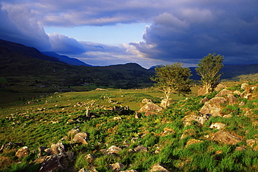 Molls Gap, Killarney region, County Kerry, Munster, Republic of Ireland, Europe