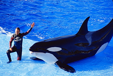 Shamu Show, Seaworld, San Diego, California, United States of America, North America