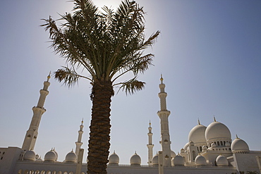 Domes and minarets of the new Sheikh Zayed Bin Sultan Al Nahyan Mosque, Grand Mosque,behind a palm tree, Abu Dhabi, United Arab Emirates, Middle East