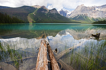 Fallen tree trunks, Emerald Lake, Yoho National Park, UNESCO World Heritage Site, British Columbia, Rocky Mountains, Canada, North America