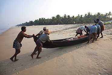 Fishermen pushing traditional boat with catch up the beach at Marari Beach, Kerala, India, Asia