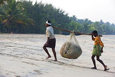 Fishermen carrying their catch up the beach at Marari Beach, Kerala, India, Asia