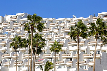 Apartment block and palm trees, overlooking Playa del Matorral, at Morro Jable, on the volcanic island of Fuerteventura, Canary Islands, Spain, Atlantic, Europe