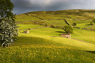 Stone field barns in wild flower meadows, Keld, Swaledale, Yorkshire Dales National Park, North Yorkshire, England, United Kingdom, Europe