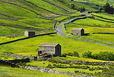 Meadows with field barns, Swaledale, Yorkshire Dales National Park, North Yorkshire, England, United Kingdom, Europe