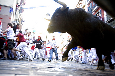 Running of the bulls (Encierro), San Fermin festival, Pamplona, Navarra, Spain, Europe