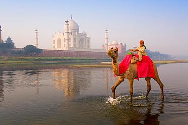 Boy riding camel in the Yamuna River in front of the Taj Mahal, UNESCO World Heritage Site, Agra, Uttar Pradesh, India, Asia