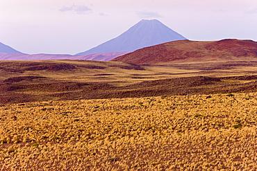 The altiplano at an altitude of over 4000m looking towards Volcan Chiliques at 5727m, Los Flamencos National Reserve, Atacama Desert, Antofagasta Region, Norte Grande, Chile, South America