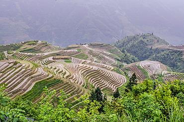 Dragon Spine Rice Terraces, Longsheng, Guangxi, China, Asia