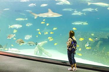 People watching the fish at the North Carolina Aquarium, Manteo, Roanoke Island, North Carolina, United States of America, North America
