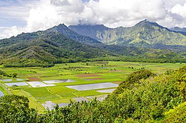 Taro fields in Hanalei National Wildlife Refuge, Hanalei Valley, Kauai, Hawaii, United States of America, Pacific
