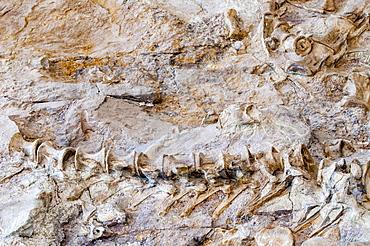 Dinosaur National Monument, Dinosaur, Utah, United States of America, North America