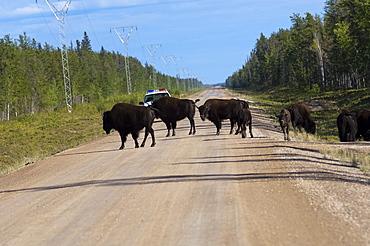 Wood Buffalo National Park, Northwest Territories, Canada, North America