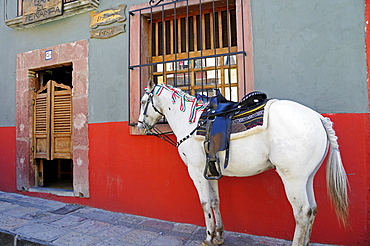Mexico, Bajio, San Miguel de Allende, Horse tied up on street outside a cantina a men only bar with saloon doors.