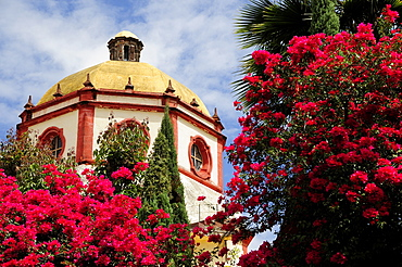 Mexico, Bajio, San Miguel de Allende, Dome of the Parroquia church with bright pink bougainvillea growing in foreground.