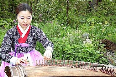 Music, Instrument, Koto, Japanese woman in traditional clothing playing Koto Harp.