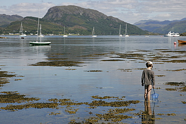 Scotland, Ross & Cromarty , Plockton, Young boy wading with fishing net in Loch Carron.