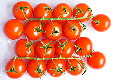Food, Fruit, Tomato, A tray of red cherry tomatoes on the vine.