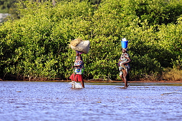 Gambia, People, Two women crossing water in bare feet carrying walking stick and rice in bucket and straw on their heads.