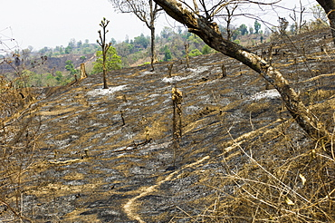 Bangladesh, Chittagong Division, Bandarban, Hillsides burned in the traditional slash and burn style of juma agriculture.