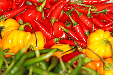 Plants, Flowers, Chilli Peppers, Chillis, display of various types of Capsicum chilli peppers.