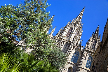 Spain, Catalonia, Barcelona, The main facade and spire of the Cathedral with olive trees and palms in the foreground in the Old Town district.